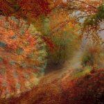 Corona und Herbst - eine explosive Mischung