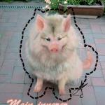 Mit meinem Schweinehund auf du und du