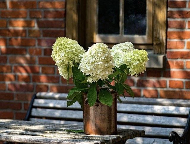 Ein schöner Platz, eine Bank, ein Strauß Hortensien auf dem Tisch