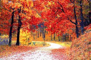 Spaziergang durch den Herbstwald