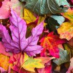 Herbstlich bunte Blätter am Boden liegend